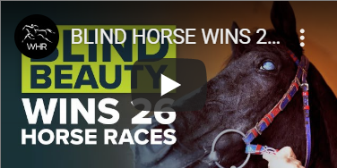 Meet Laghat, the Blind Horse Who Won 26 Races