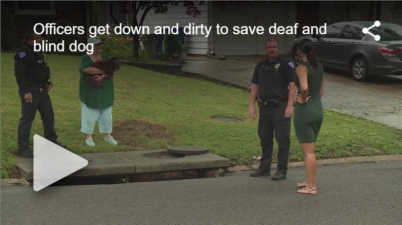 Police Rescue Blind, Deaf Dog From Sewer