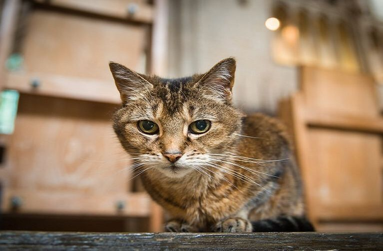 Beloved Cathedral Cat Retires Due to Poor Eyesight